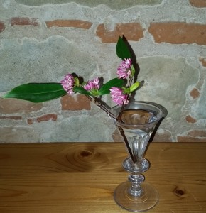 Omen 2. Daphne Odora. O Wind, if winter comes, can Spring be far behind?
